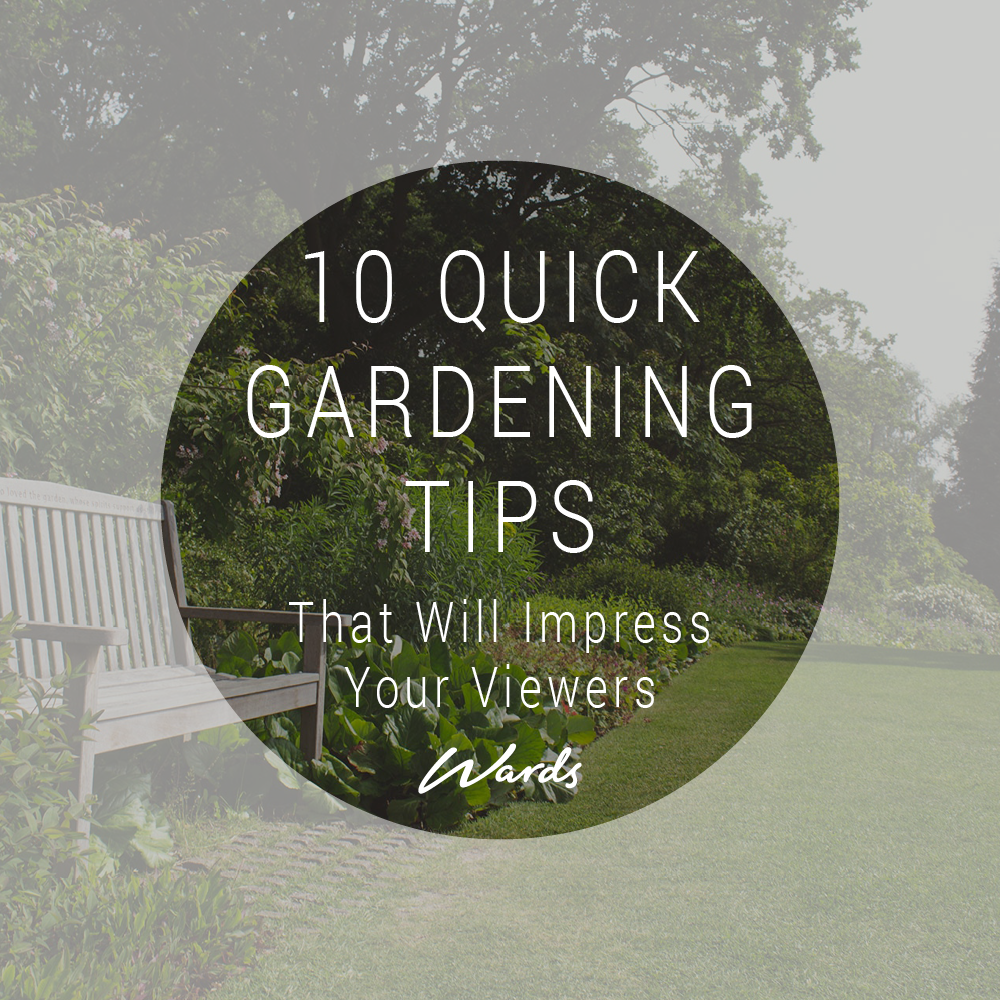 10 Quick Gardening Tips That Will Impress Your Viewers